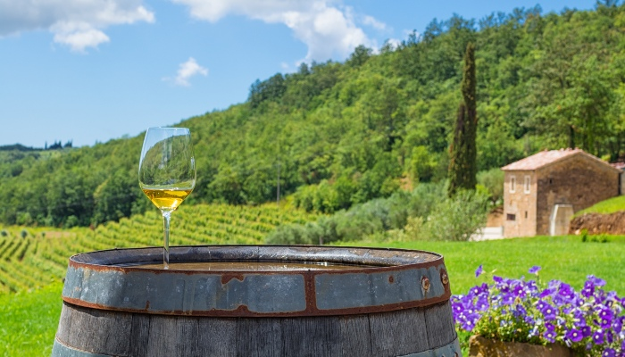 Winery in Istria