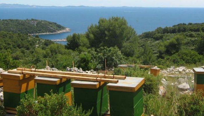 Beekeeping on Solta